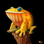 Fabric Frog